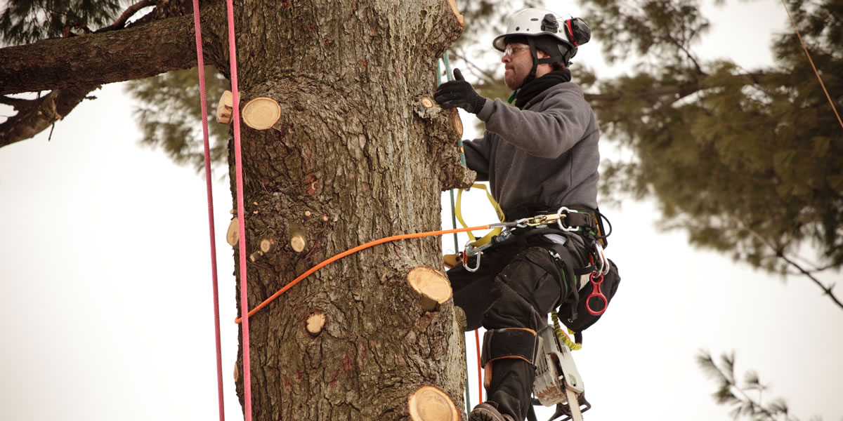 Best Tree Trimming Services